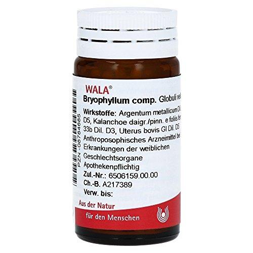 BRYOPHYLLUM COMP.Globuli 20 g Globuli